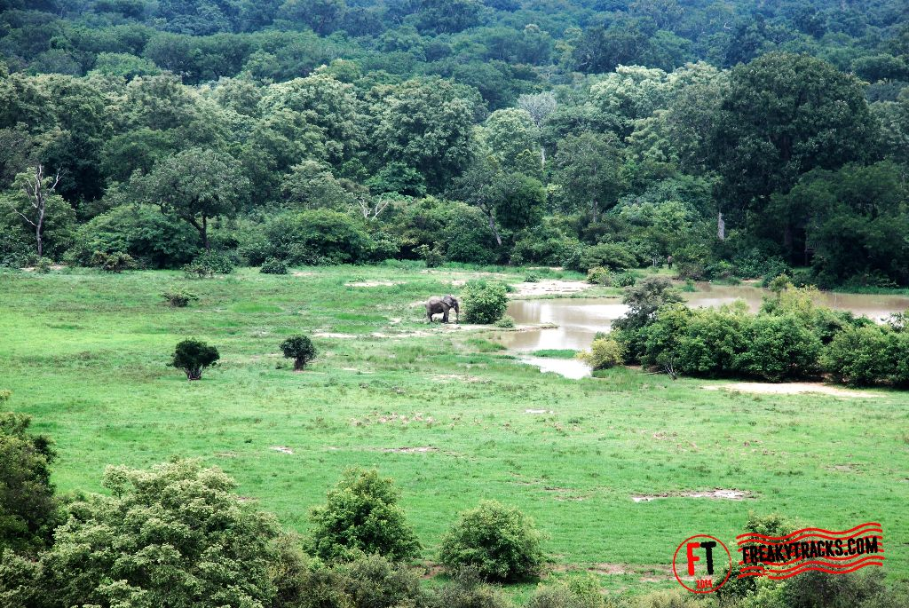 The lonely elephant, Mole National Park
